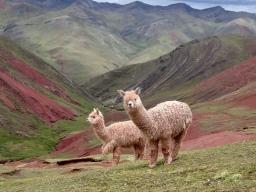 To Cusco: Capital of the Incas